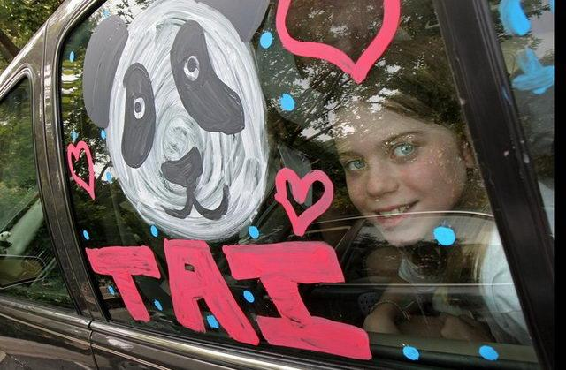 July 9, 2007: Elizabeth Fuller, 11, decorated her car with drawings of Tai Shan in honor of his 2nd birthday. Fuller traveled with two friends to D.C. from Phildelphia to celebrate Tai Shan's big day. Tai Shan was born July 9, 2005 at 3:41 a.m. He is the first surviving giant panda cub born at the Smithsonian National Zoo. D.C. Mayor Adrian Fenty once called Tai Shan Washington's most important citizen. He was originally supposed to be sent to China when he turned 2, but under an agreement with the Chinese government, the zoo kept him for an additional two years.