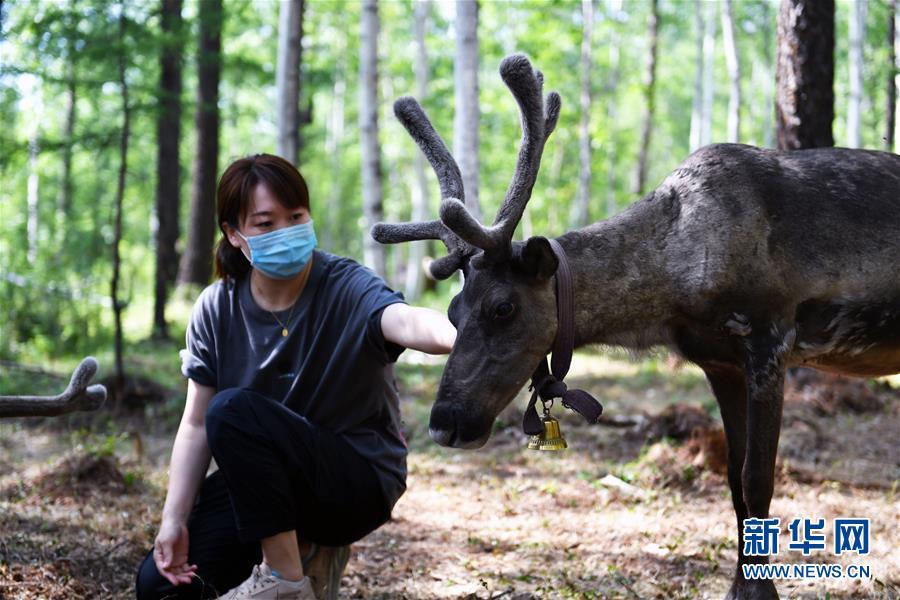 (新华全媒头条·走向我们的小康生涯·图文互动)(9)走出山林奔小康——鄂温克族迎来新生涯