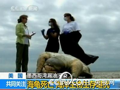 环境保护者和野生动物专家担心海洋生物会因为原油的