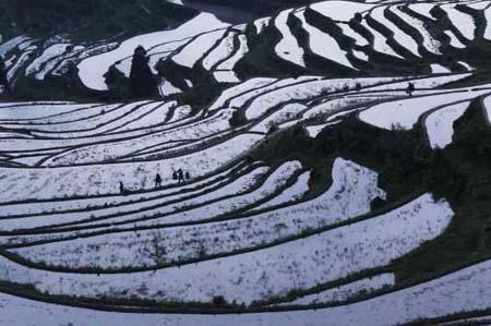 Terraces are seen in Yunhe county of east China's Zhejiang Province, on June 6, 2010. The terraces of 50 square kilometers in Yunhe have been a seduction for tourists and photographers. (Xinhua photo)