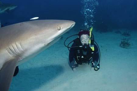 swim-sharks