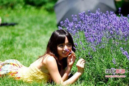 Enjoy a romantic date at the Lavender Festival this summer