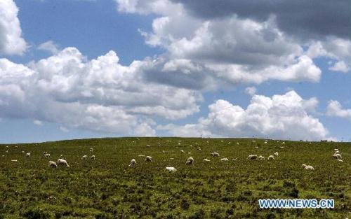 Photo taken on July 11, 2010 shows a pasture in Yugu Autonomous County of northwest China's Gansu Province. Local residents of Yugu ethnic group yielded the harvest of wool and livestock. It is estimated that their income will rise as a result of the positive prices of wool and mutton this year.(Xinhua/Lian Zhenxiang)