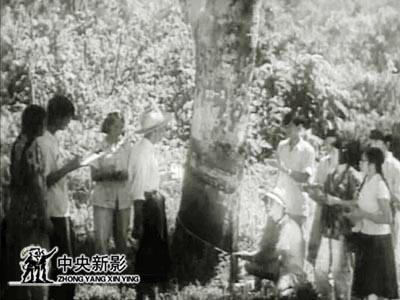 1951年,在海南岛,开始了第一个天然橡胶生产基地的建设.