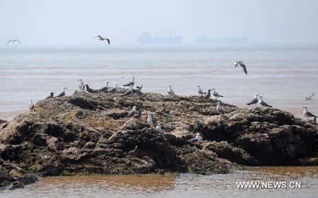 Birds perch on a reef in the bird protective zone of Wuzhishan Islands in Zhoushan City, east China's Zhejiang Province, July 30, 2010. More than 10,000 birds of over 40 species inhabit the Wuzhishan Islands in the East China Sea, some of which are of rare species. [Xinhua/Xu Yu]