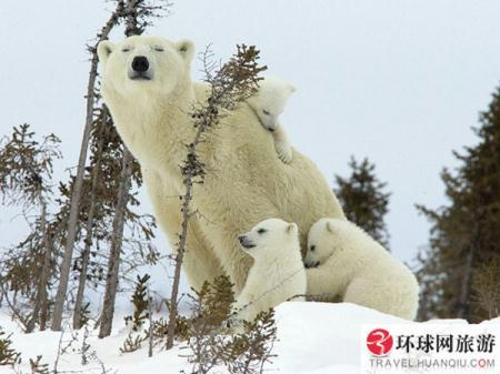 (Photo Source: huanqiu.com)