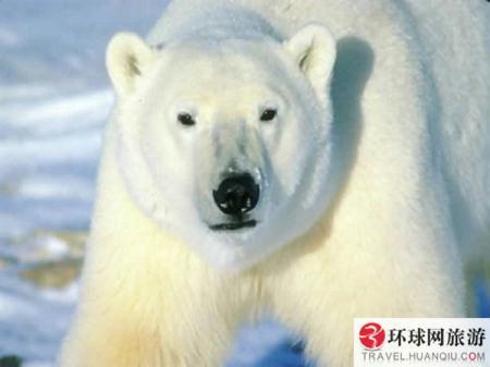 (PhotoSource:huanqiu.com)