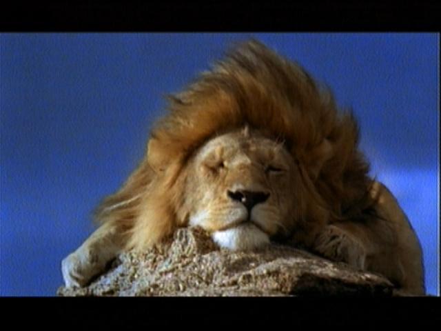 狮群争霸(下)-综艺台-中国网络电视台