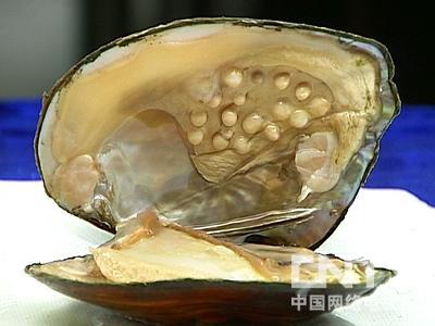 淡水珍珠蚌养殖技术(下)(视频教程)在线播放