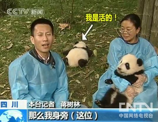 [视频]大熊猫的小秘密:熊猫宝宝的秘密