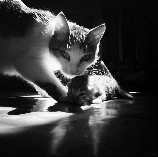 الصور بالأبيض والأسود للقططة