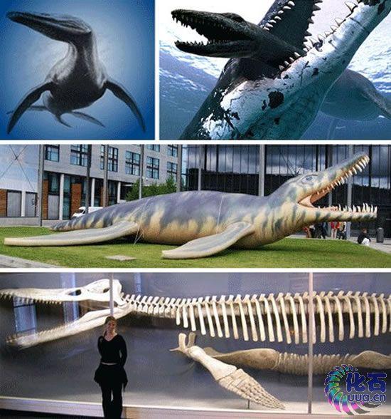 感谢上帝,最近的进化出现了一种喜人的趋势,即赋予大自然动物强大的思考能力,进而允许我们人类上升至食物链的顶端。如果生活在远古时代,我们可能就没有现在这么幸运了。不同的时代要求动物具备不同的生存能力,曾几何时,巨大的体型和凶猛的习性一度成为动物最重要的特性。以下列举的是14种体型最大、身体最为强壮并且从某种程度上说也最为怪异的动物。   尽管生活在近3亿年前,旋齿鲨仍与它们的现代近亲类似。现代鲨鱼长有数排锯齿状牙齿,一旦有牙齿脱落便会长出新牙。相比之下,旋齿鲨颚部位置较低,牙齿排列出的形状看上去有点像一