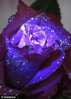 把这种配方喷洒在花朵和植物上,然后把它们放置在特殊光源旁边,让它们发出荧光