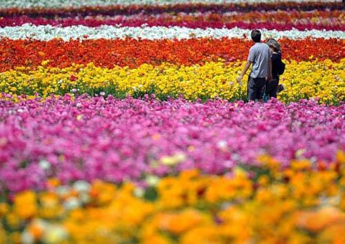 بحور الزهور