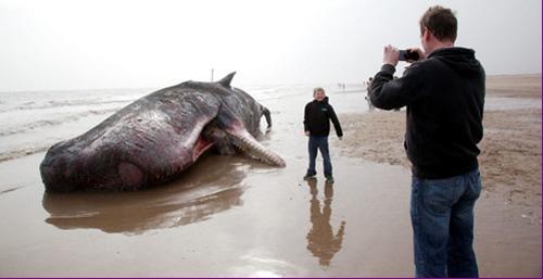 还有不少人和死亡的鲸合影。
