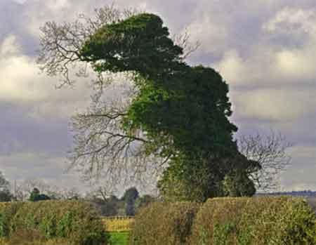 这棵大树外形奇特,犹如一头巨型恐龙。