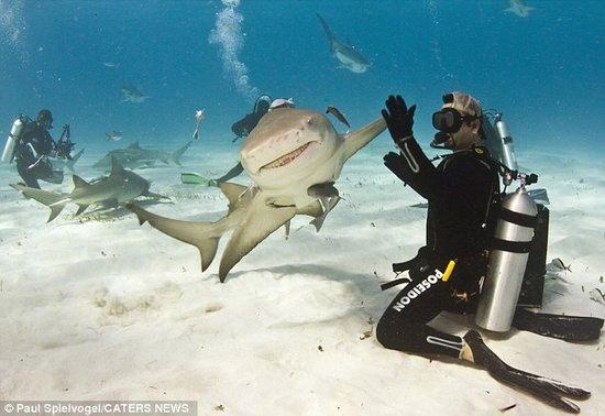 """鲨鱼与潜水员""""击掌""""问好"""