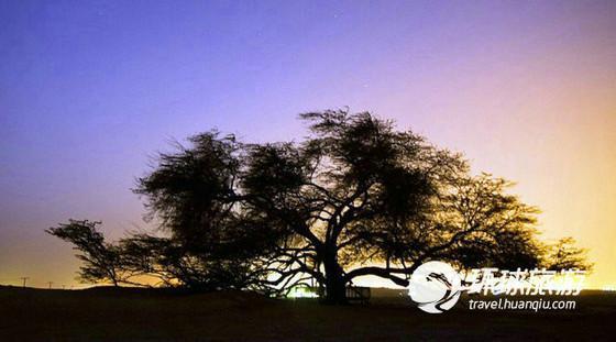 世间罕见的十种树(组图)