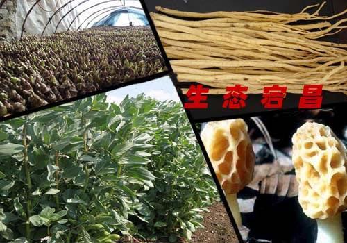 蚕豆横切面初生结构