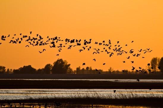 吉林省长岭县龙凤湖水利风景区——鸟类天堂
