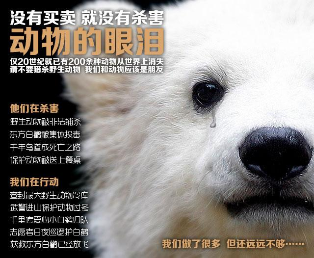 动物的眼泪__中国网络电视台