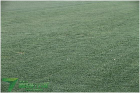 """用""""小草""""推进的农业产业结构调整"""