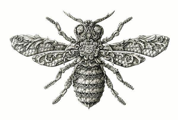 细腻手绘昆虫