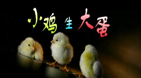 《小鸡生大蛋》