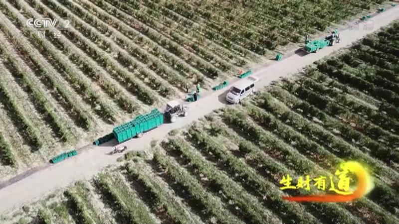 《生财有道》 20201124 宁夏贺兰山:昔日戈壁变身绿色果园