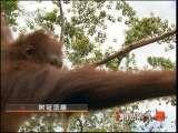 探秘雨林之树冠顶端  [自然传奇] 20110630