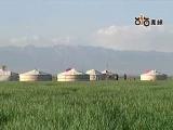 美丽的马兰滩草原