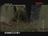 颠沛的国宝 第五集 [发现之路] 20111123