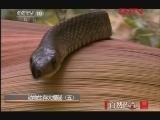 《自然传奇》 20120126 动物生存大揭秘(五)