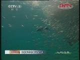 《人与自然》 20120413 自然影片拍摄纪实(下)