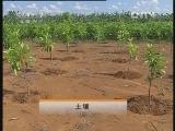 白兰花栽培技术