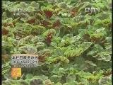 苋菜栽培技术、胡萝卜的加工技术
