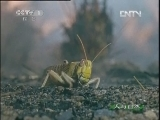 《人与自然》 20120524 自然发现 自然的威力——天火(下)