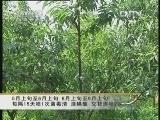 点击播放 桃树常见病虫害防治