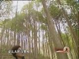 王敏翔沉香种植:朽木成金_致富经