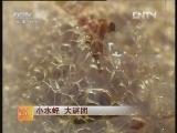 小水蛭 大谜团