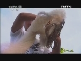 《茶叶之路》 20120803 第二十六集 江和湖的记忆