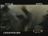 《探索·发现》 20120826 李自成宝藏之谜(七)