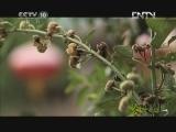 《茶叶之路》 20120903 第五十七集 农耕桃源(上)