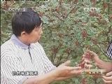 冉庆强种植与众不同种花椒
