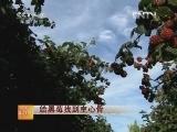 黑莓种植经:给黑莓找到主心骨