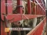 养牛技术:一把稻草解烦忧