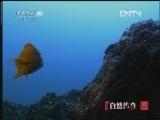《自然传奇》 20121107 动物生存奥秘(4)