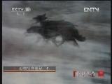 《自然传奇》 20121108 动物生存奥秘 (5)