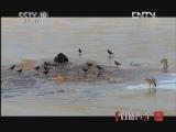 《自然传奇》 20121110 动物生存奥秘 (7)
