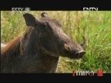 《自然传奇》 20121112 动物生存奥秘 (9)